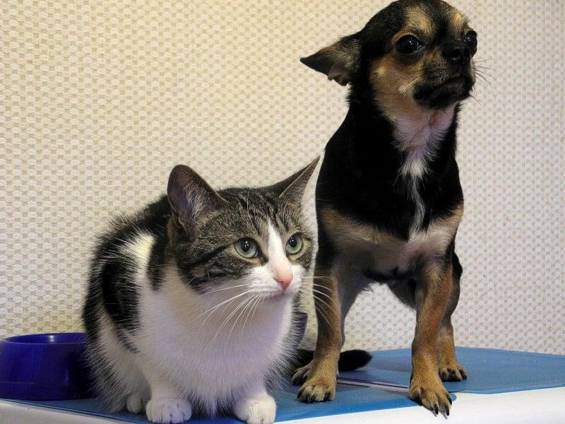 chat-et-petit-chien